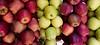 Apple Shop (Sadot Arefin) Tags: apple appleshot redapple greenapple bangladesh dhaka mohammadpur বাংলাদেশ ঢাকা canon canonpowershot sx50 canonpowershotsx50hs powershot powershotsx bridgecamera pointnshoot pointshoot