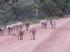 DSCN2641 (Caroline Campagni) Tags: pantanal unesp rio claro carol campagni biologia bióloga savana estépica