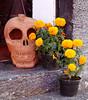 Mirada vacía (supernova.gdl.mx) Tags: dia muertos ajijic chapala mexico calavera barro flor naranja anaranjado artesania