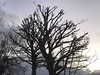 Winter Shadows (firehouse.ie) Tags: wintertime gray grey colours colors darkness dark shade dusk shadows shadow clouds skies sky countyclare ireland 2017 november winter nature trees tree