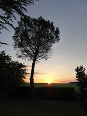 Sunset (stefrd) Tags: sunset campagne arbres calm trees fields