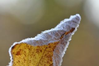 one single leaf