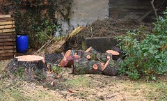 (:Linda:) Tags: germany thuringia town hildburghausen garden wood larchtree woodpile