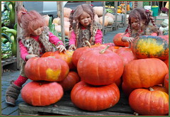 Hier wird eingekellert ... wie sollen wir all die Kürbisse nach Hause bringen ... (Kindergartenkinder) Tags: kürbis hofladen kindergartenkinder annette himstedt dolls annemoni sanrike tivi kostüm