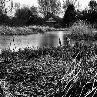 La fine couche de glace fait briller l'étang...