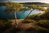 Mediterráneo (el vuelo del escorpión) Tags: mar sea mediterráneo mediterranean isla island mallorca baleares balearicislands spain españa costa coastline seashore golden hour tree pine peace peaceful sunset dusk