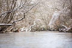 North Georgia Snow & Fly Fishing (DitchGyrl) Tags: 2017 cartecay ellijay fishing flyfish river snow december winter