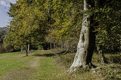 The Hollies (jimhellier) Tags: berkshire downs the hollies autumn landscape