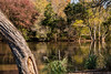 the park (Dotsy McCurly) Tags: park scene nature beautiful nj newjersey autumn colors water pond lake reflections 7dwf landscape nikond750 tamron18400mmf3563
