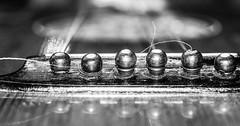 Lute- Bridge and bridgepins (Barb120459) Tags: macromondays musicalinstruments memberschoice