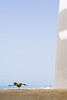 Always the same friend. (Saâd Jebbour) Tags: balcony bird sky blue home hogar summer shade harhoura sidelabed temara rabat morocco 2017 50mm vsco nikon saadjebbour