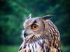 watchful owl (pamelaadam) Tags: digital scotland summer biggestgroup fotolog thebiggestgroup owl meetup bird huntly aberdeenshire june 2007