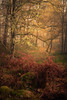 Loch Ard (jasonhudson2) Tags: loch ard trossachs scotland landscape woods trees autumn sony