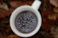 November in my cup (Ralaphotography) Tags: november season winter autumn fall herbst brown red cup sticks trees leaves foliage morning tea reflection cold walk forest woods nature landscape ramona mahrla