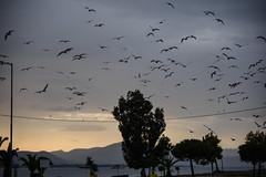 GREECE-WEATHER (X-Andra) Tags: artaki bird birds chalkida clouds conditions euboea evia extreme greece greek panic seagull weather