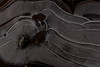 IMG_2946 (monika.carrie) Tags: monikacarrie nature ice icecrystal scotland macro