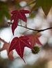 Autumn Leafs Shot with Zeiss (Waldemar*) Tags: nikon d800e zeiss milvus 50mmf14 bokeh autumn fall foliage leafs