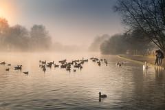 Fog on the River Thames (powellspin) Tags: riverthames ducks geese gulls sunlight morningmist child marlow buckinghamshire coot fog sunrise