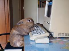 La tecnologia è per tutti (Simone Onorati) Tags: computer coniglio keyboard lavoro macintosh rabbit scrittura scrivere tastiera work writing
