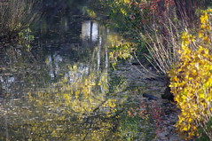 River Reflections (Bury Gardener) Tags: abbeygardens burystedmunds suffolk england eastanglia uk landscape 2017 snaps
