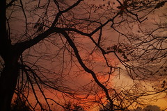 Sunset Silhouettes (Dave Roberts3) Tags: wales gwent newport sunset evening landscape autumn fall leaf leaves bellevuepark silhouette orange yellow naturethroughthelens