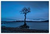 Bloody Cold (tiggerpics2010) Tags: lonelytree lochlomond millarochybay beach winter snow scotland bluehour