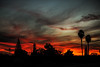 San Joaquin Valley Sky (wyojones) Tags: california bakersfield rosedalehighway rosedale silhoutte silhouttes sunset tree pine palmtree powerlinepole red color