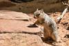 Squirrel (deepskywim) Tags: zoogdieren dieren eekhoorns springdale utah unitedstates us