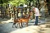 I want more (snowpine) Tags: street streetphotography people deer park japan nara nikon nikond850