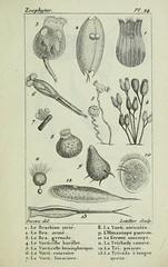 n68_w1150 (BioDivLibrary) Tags: annelida atlases cnidaria echinodermata eels helminths worms universitylibraryuniversityofillinoisurbanachampaign bhl:page=54348110 dc:identifier=httpsbiodiversitylibraryorgpage54348110