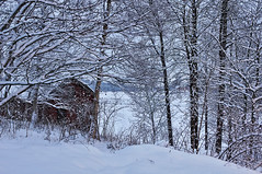 This morning (Stefano Rugolo) Tags: stefanorugolo pentax k5 smcpentaxda1855mmf3556alwr winter sweden countryside snow barn tree today hälsingland sverige forest wood sky landscape longexposure