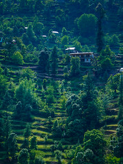 34944692185_5110750100_o (harshmalavia) Tags: himalayas green nature slopes hill himachal pradesh landscape sony nex 3n beginner photography indianphotogrphers trees natgeo amazingindia