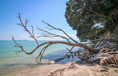Treescape (Andy.Gocher) Tags: andygocher canon100d newzealand beachlands beach trees sea water shore coast landscape