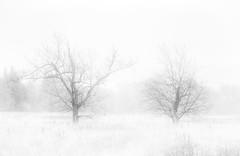 Winter mists (Peter Warne-Epping Forest) Tags: mist coppedhall peterwarne essex eppingupland highkey cloud rain trees