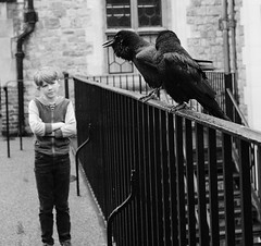 Guardians of the Universe (Joe Daly) Tags: leica leicam leicamtyp240 leicam240 photography camera 35mm summicron london raven bw blackandwhite photographer bwstreetphotography street monochrom people streetlife coffee toweroflondon ravens kid bird animal