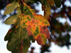 Autum nature (robárt shake) Tags: autum herbst plant pflanze herbstlich laub nature ökologie ökologisch kreislauf wheel natürlich weltlich zerfall