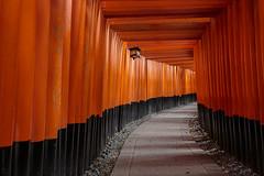 Senbon Torii (andyrousephotography) Tags: japan kyoto fushimiinarishrine fushimiinaritaisha shinto senbontorii vermilion redgates thousands cliché andyrouse canon eos 5d3 5dmkiii ef1740mmf4l
