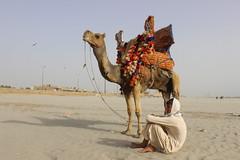 Camel rides at Sea View, Karachi