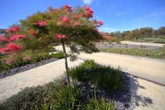 Cranbourne RBG -Billy Bunter-Nov 2017 066 (Graeme Butler) Tags: water landscape history gardens australianplants architecture victoria australia