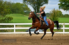 Horse & Rider in Barrell Race (amycicconi) Tags: action agility barrelrace barrellracing competition competitivesport female gallop galloping horse motion quarterhorse race rein ride riding rodeo running ruralscene speed sport woman
