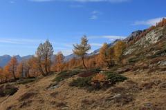 Lötschental (bulbocode909) Tags: valais suisse lötschental montagnes nature automne paysages mélèzes arbres nuages bleu jaune orange vert
