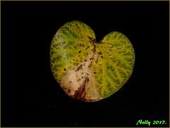 *Autumn... (MONKEY50) Tags: leaf digital pentaxart greeen nature art flickraward musictomyeyes autofocus greenscene pentaxflickraward contactgroups
