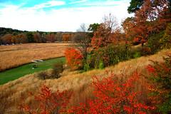Bay,bay lovely autumn  colors. (gilmavargas) Tags: forest field grass tree park landscape sky