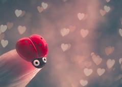 Hi! I am a little ladybug button (Ro Cafe) Tags: fingertips mm macro macromonday button ladybug bokeh hearts cute cuteness fun funny nikkormicro105f28 nikond600