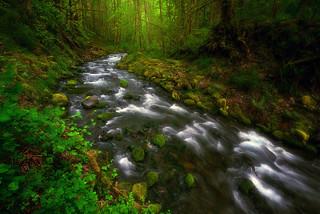 verdant cascade
