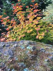 312/365: Rock and Foliage