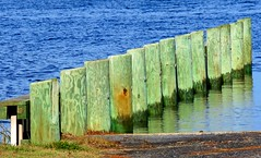 014 Pilings (baypeep) Tags: