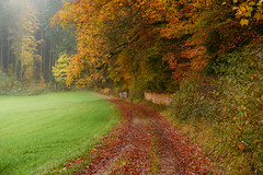 Autumn at its best (balu51) Tags: herbstmorgen herbst bunteslaub herbstfarben morgen morgenspaziergang kalt feucht neblig waldrand buchen tannen orange gelb grün braun morningwalk morning autumn autumncolors leaves forest road wet cold misty nature landscape switzerland november 2017 copyrightbybalu51