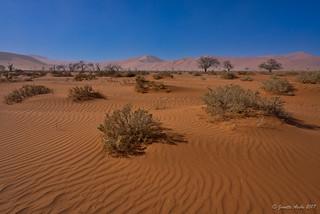 Namib desert patterns