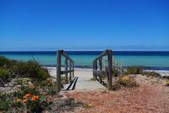 Beach entrance (Kat-i) Tags: tumbybay eyrepeninsula meer sea ocean strand beach himmel sky wasswe water blumen flowers sand australien australia 2017